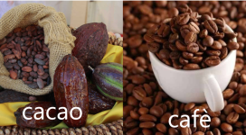 imagenwebcacaocafe